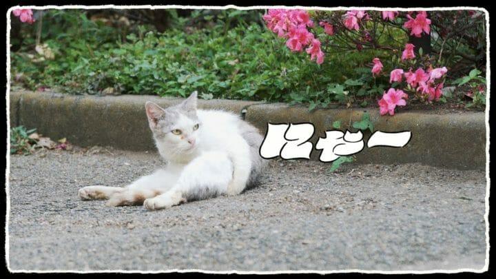 U-zhaan×環ROY×鎮座DOPENESS / にゃー feat.矢野顕子